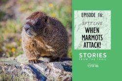 When Marmots Attack!
