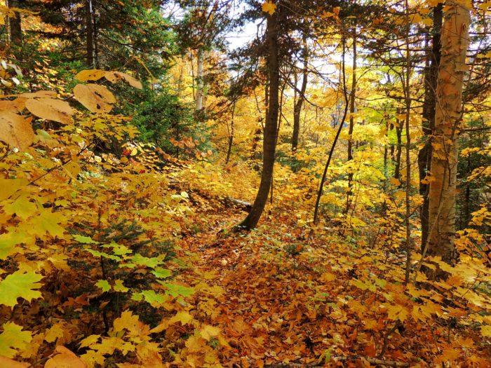 new hampshire hike leaves fall trail trees