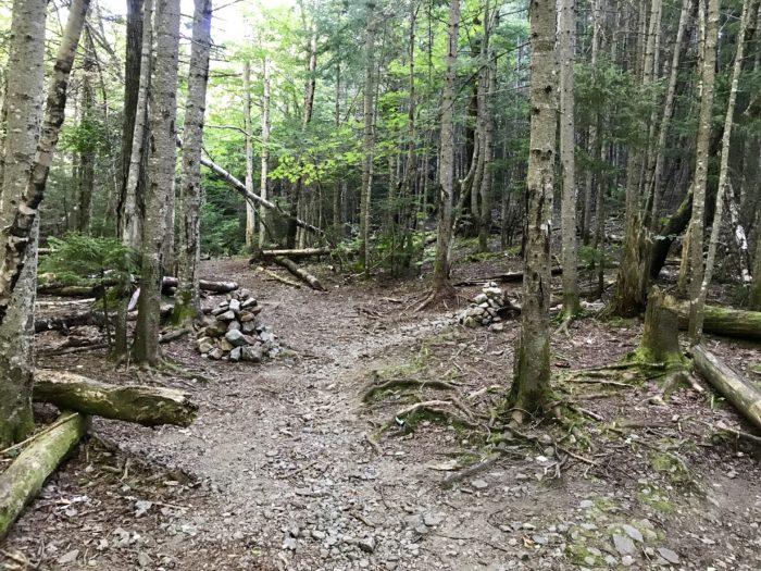 new hampshire hike woods trail