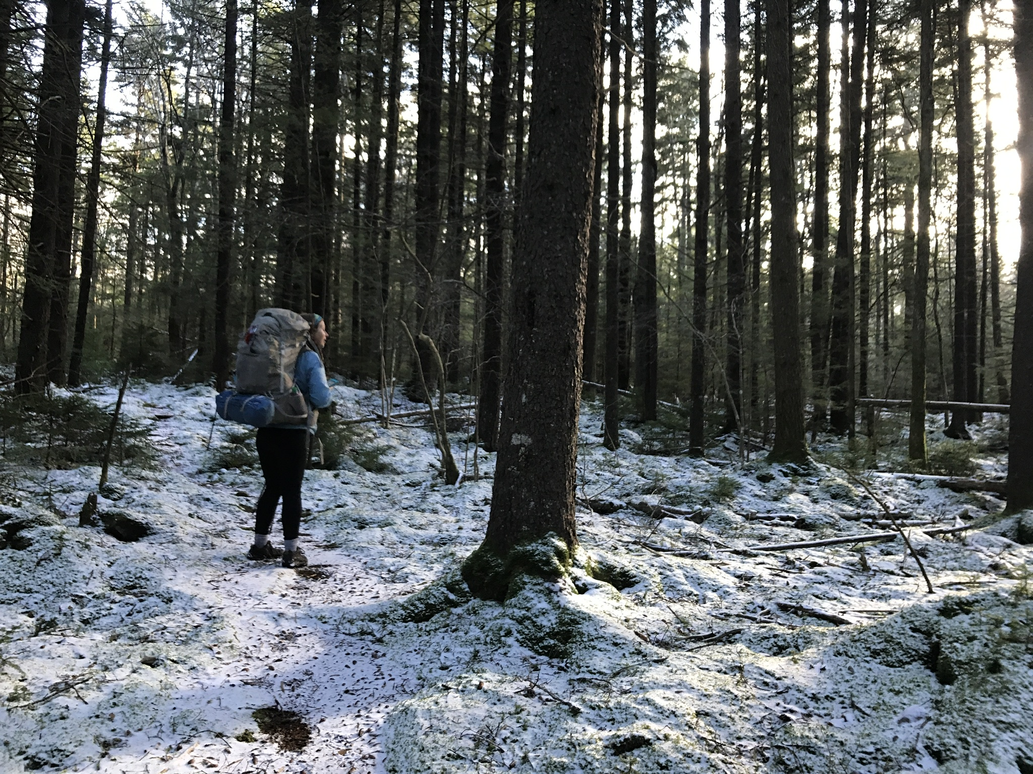 How to Hike West Virginia's Cranberry Wilderness - The Trek