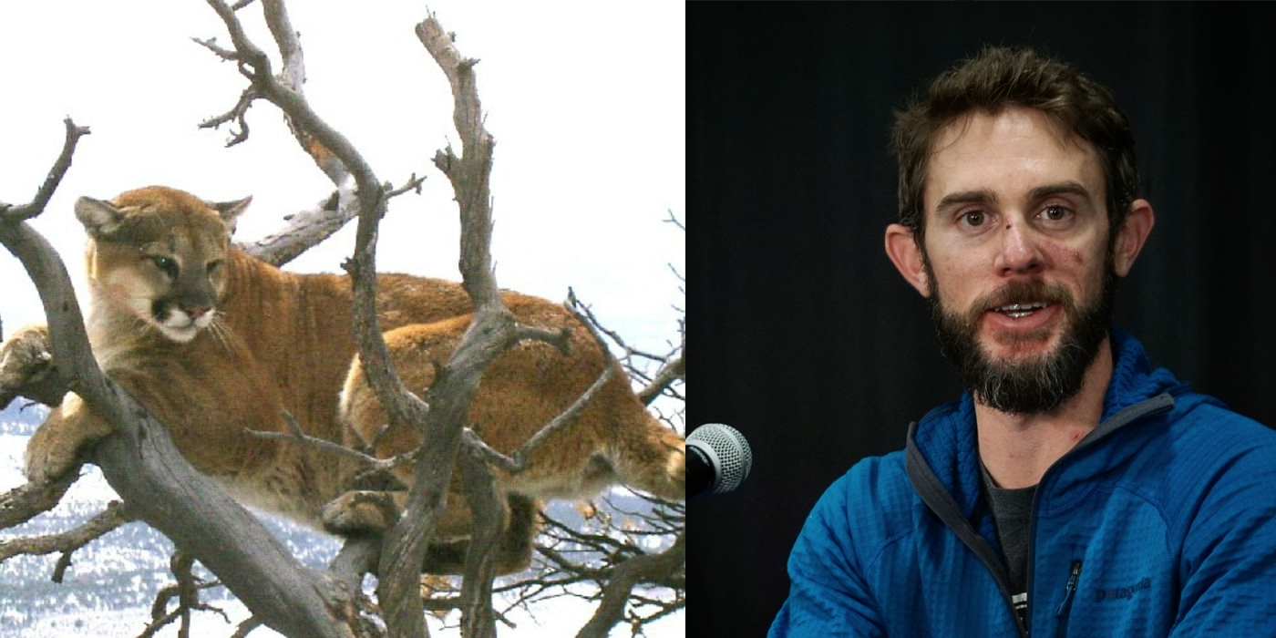 Travis Kauffman, Trail Runner Who Killed Mountain Lion with