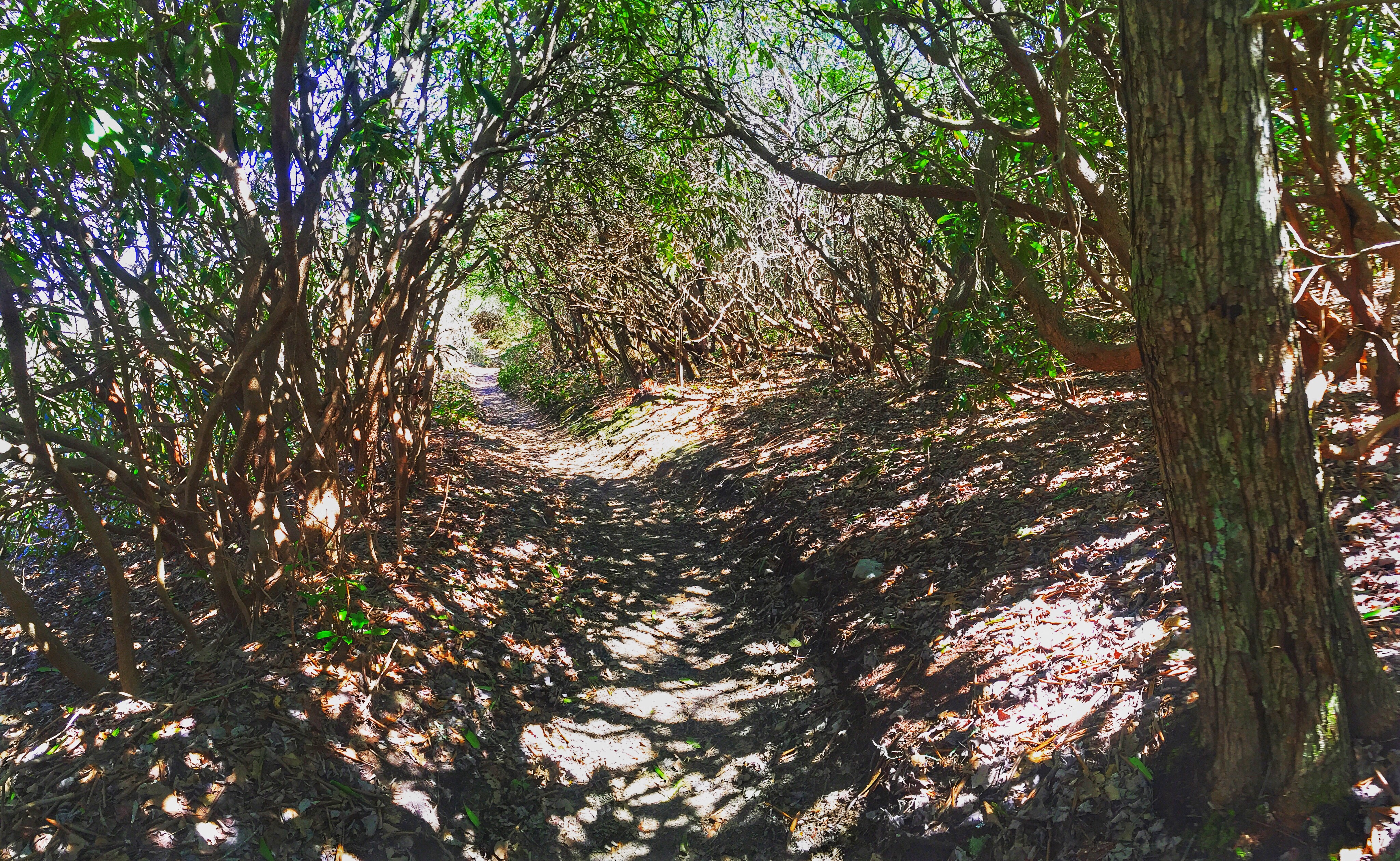 Thru Hiking Away From Addiction