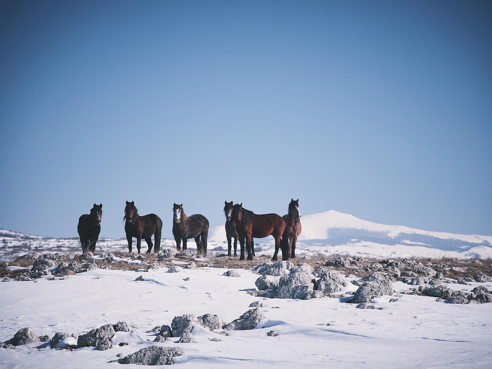 wild horses, livno, bosnia
