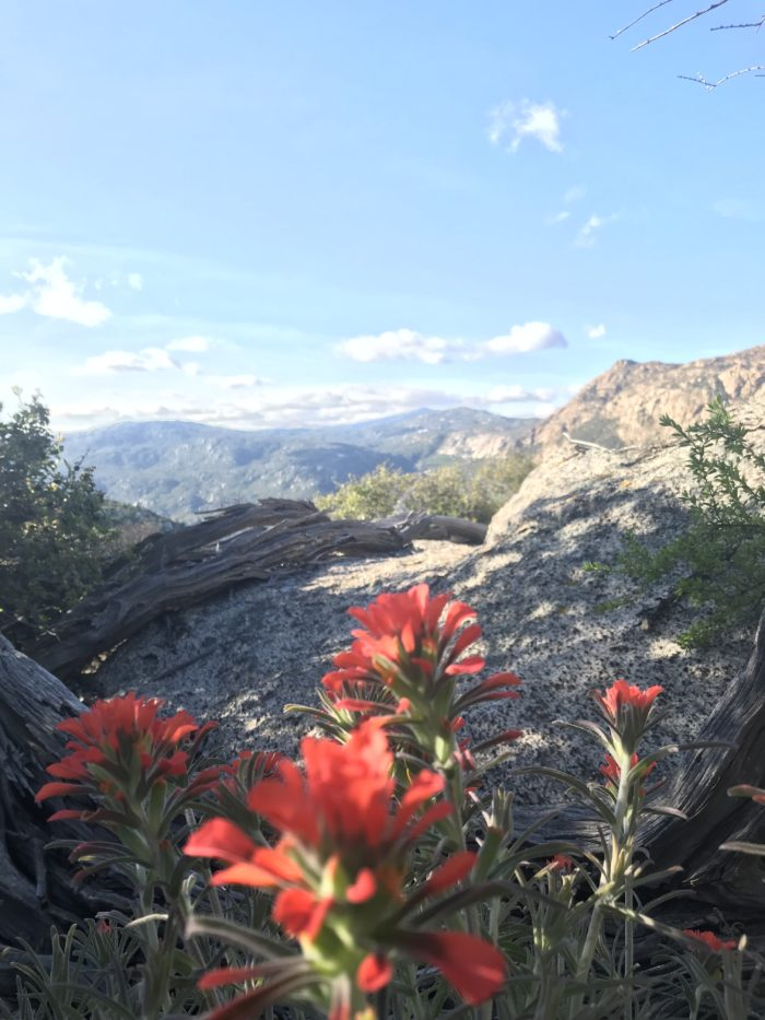 Photo of flowers overlooking the mountains on the horizon. Pacific Crest Trail thru-hike week 1.