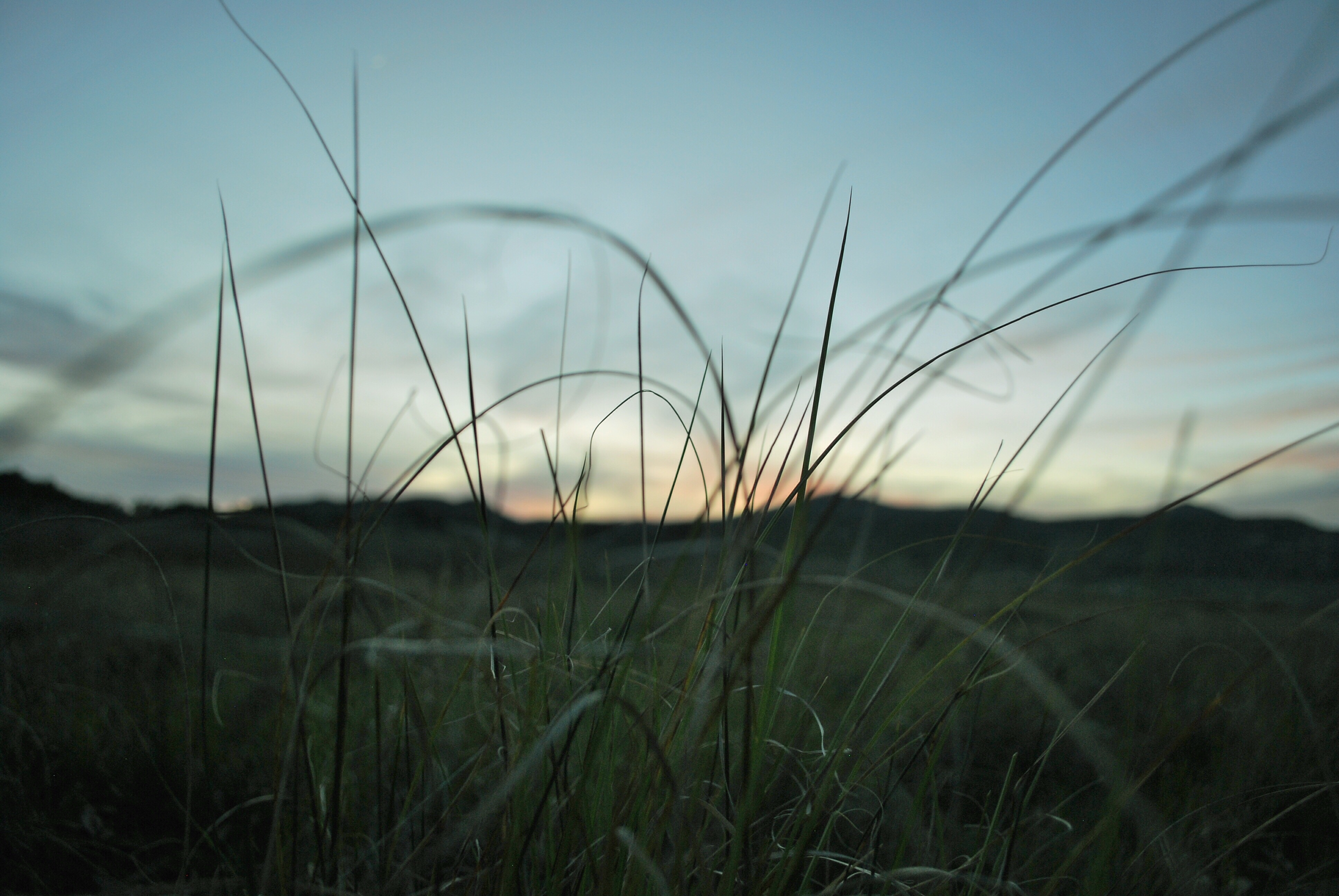 Photo of the sunset looking through grass at Lake Morena. Pacific Crest Trail thru-hike week 1.