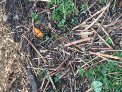 Orange peels don't belong in the forest