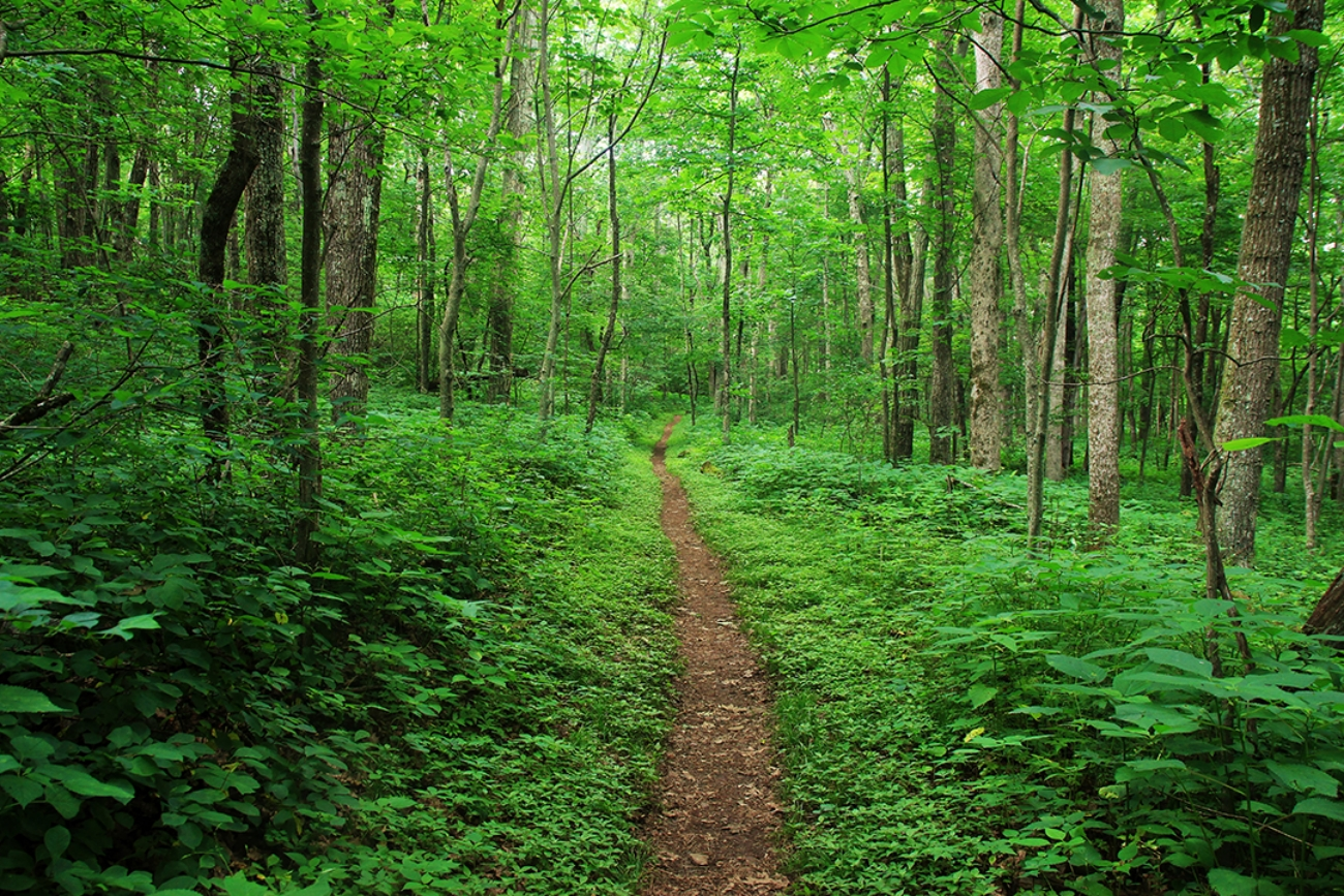 Section of the Appalachian Trail Closed Following Reported Assault