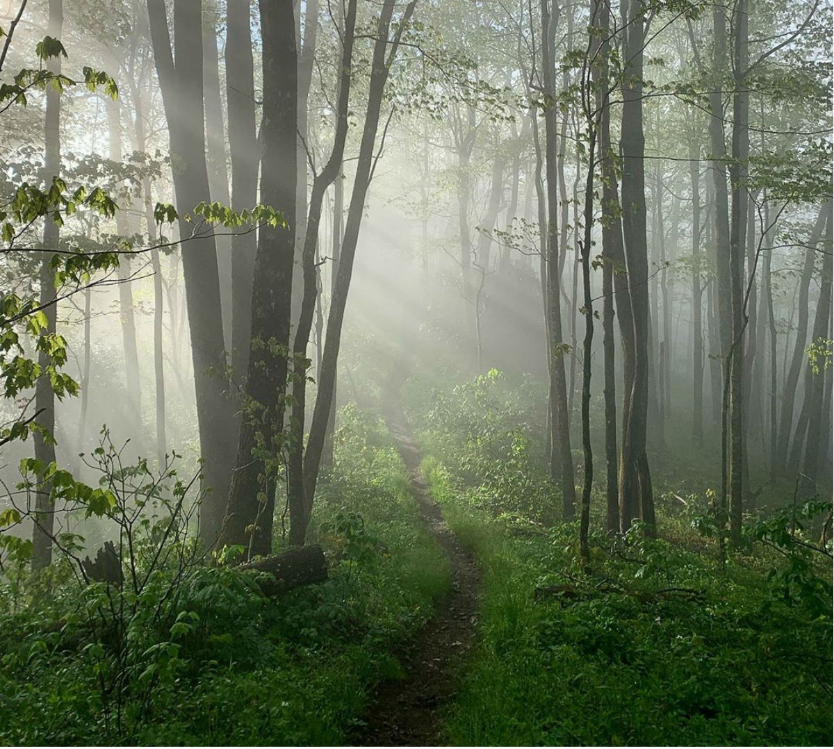 This Week's Top Instagram Posts from the #AppalachianTrail - The Trek