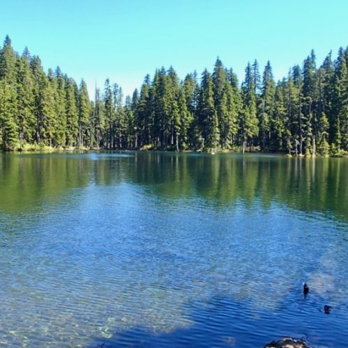 Shallow blue lake surrounded by trees