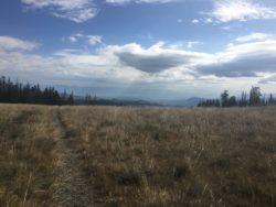 Ridge meadow