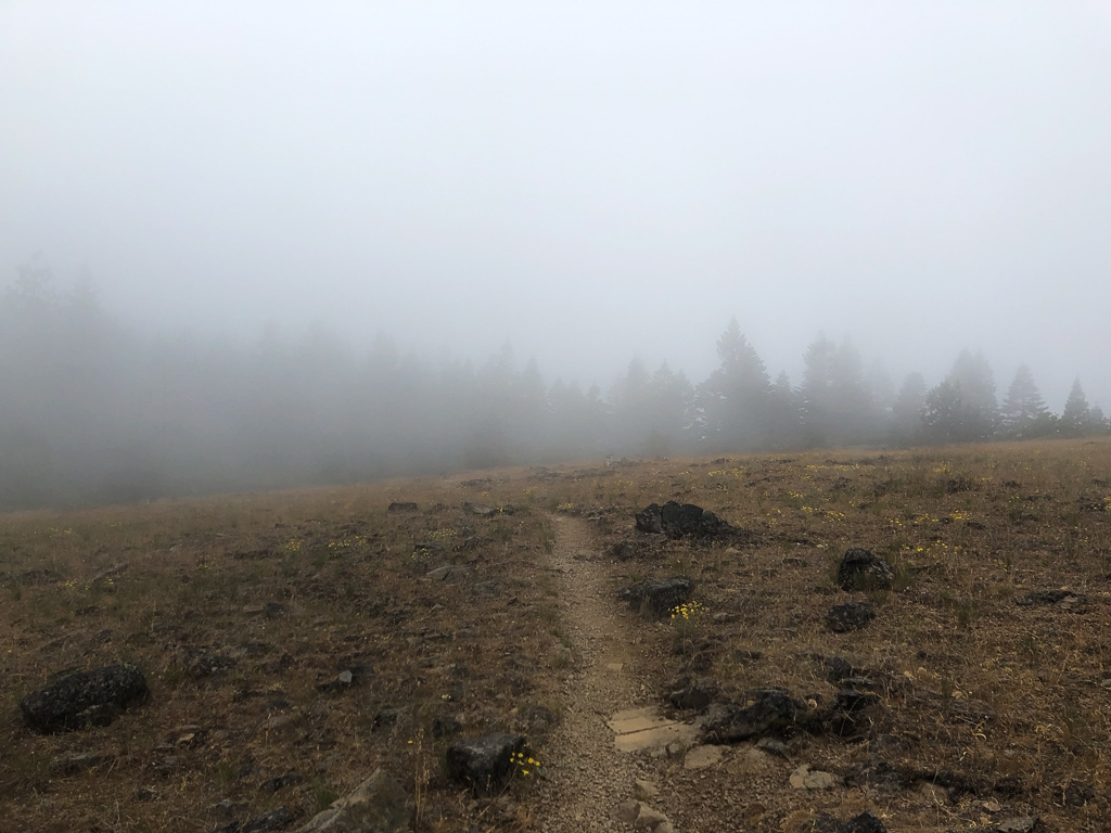 Foggy morning in Southern Oregon on the PCT