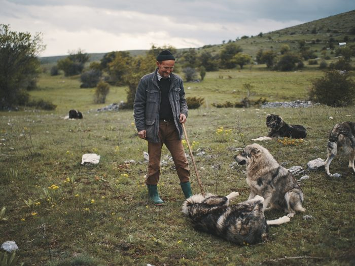 hiking in north macedonia - shepherd dogs