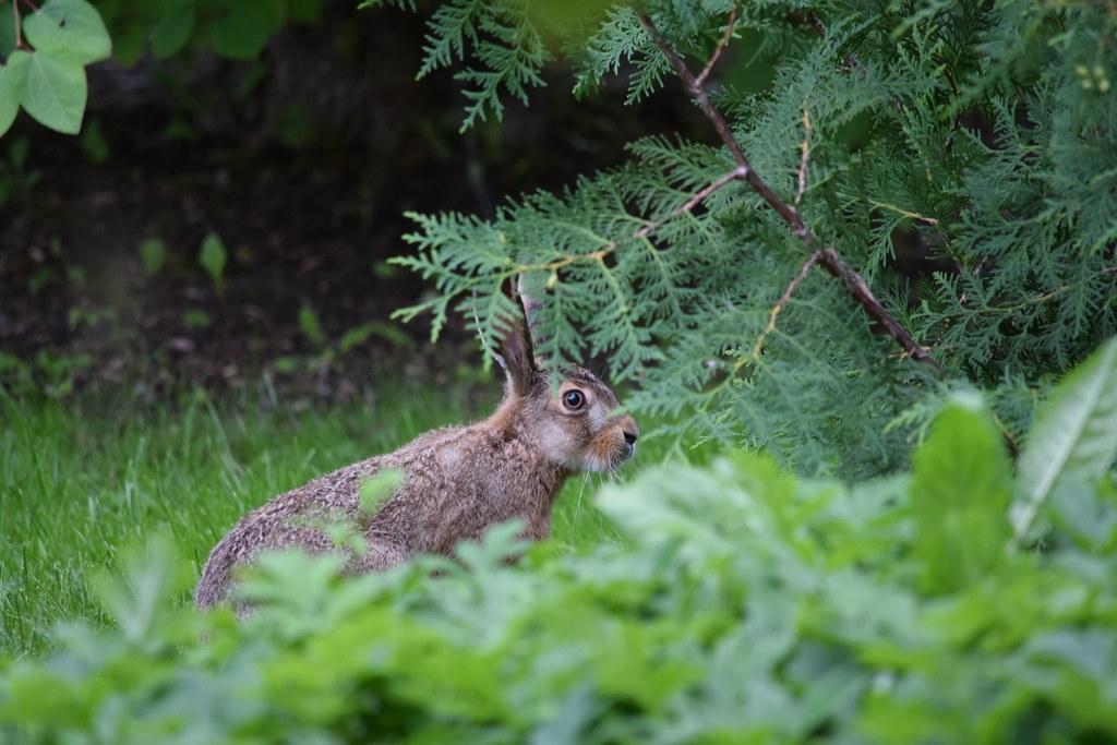 T minus 172 days - The Tortoise & The Hare - The Trek