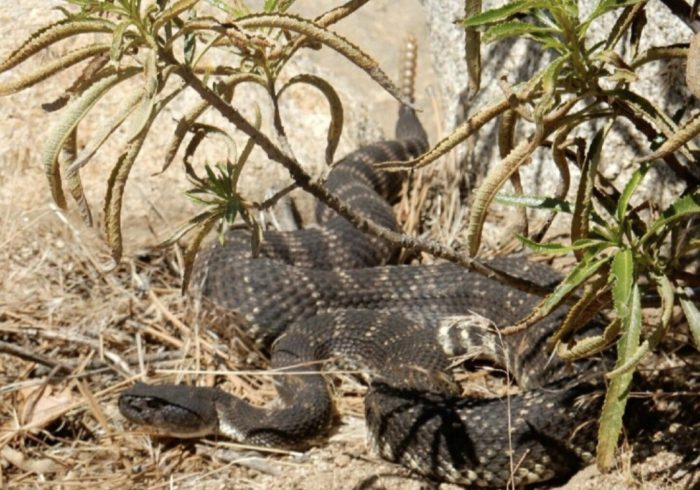 It's very likely you'll see a rattlesnake on trail.