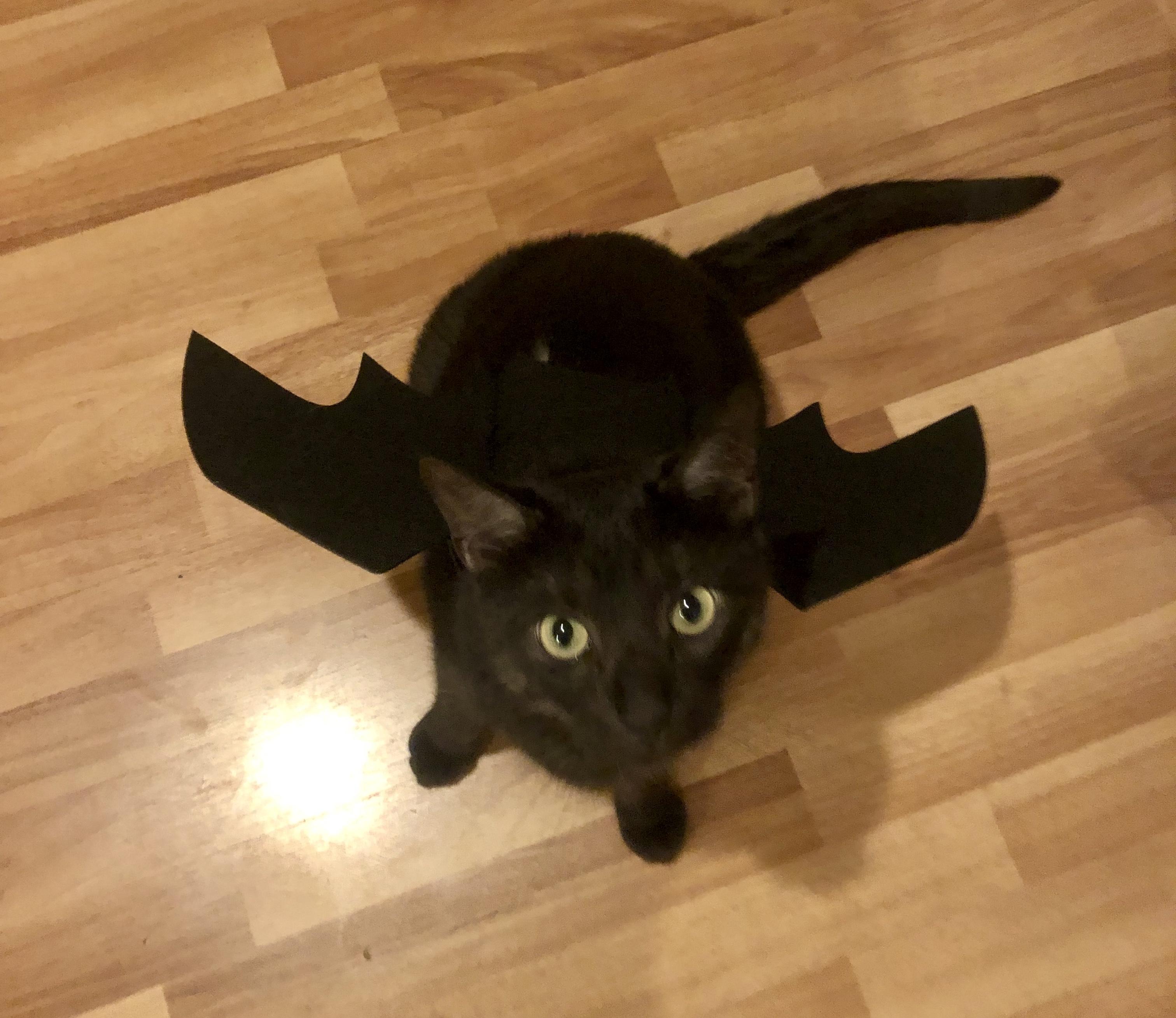 maggie Slepian PCT cat