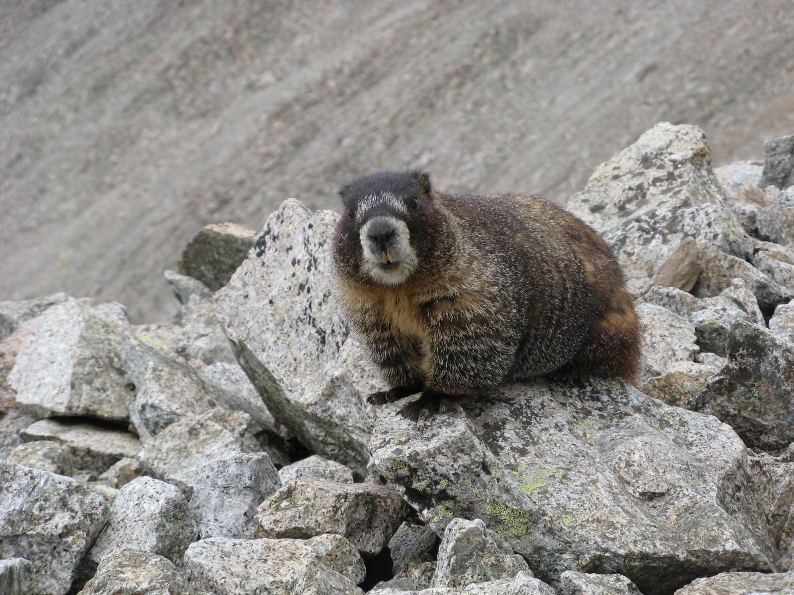 marmot tabeguache colorado clay bonnyman evans