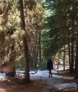 Best Local Day Hikes Around Tahoe - Forested Section of Hunter Creek Trail PC Tucker Ballister