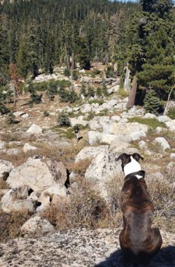 Best Local Day Hikes Around Tahoe - In Search of all Five Lakes PC Tucker Ballister