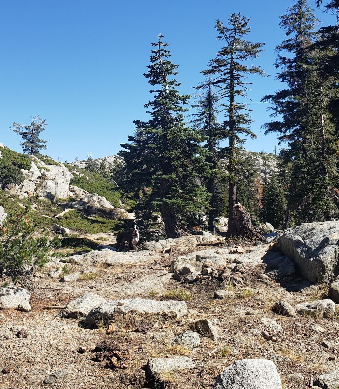 Best Local Day Hikes Around Tahoe - A Bit of Rocky Terrain PC Tucker Ballister