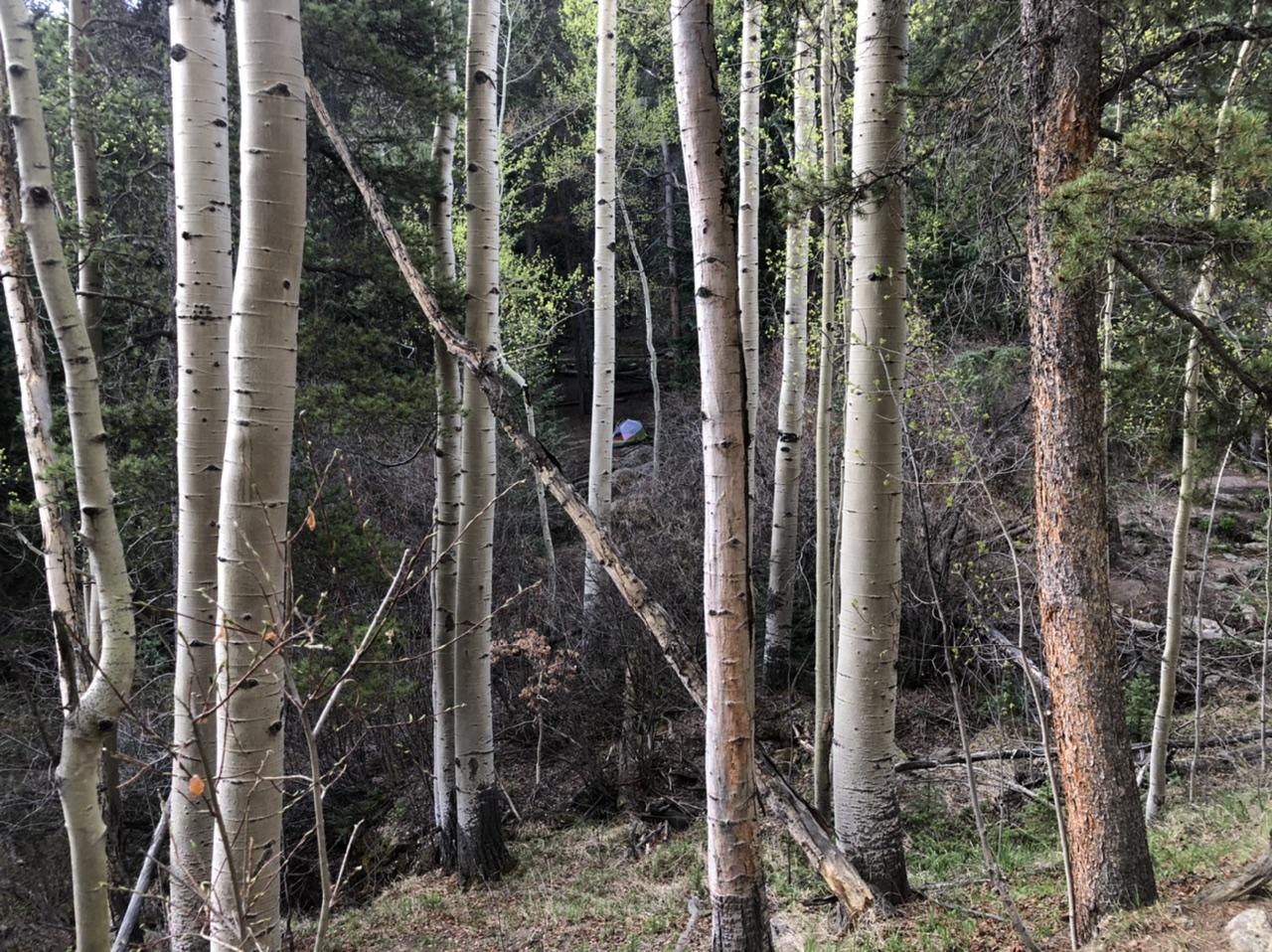 Campsite through the trees