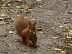 An endangered and super cute squirrel!