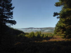 Phew, found the forest and getting close to Kingussie!