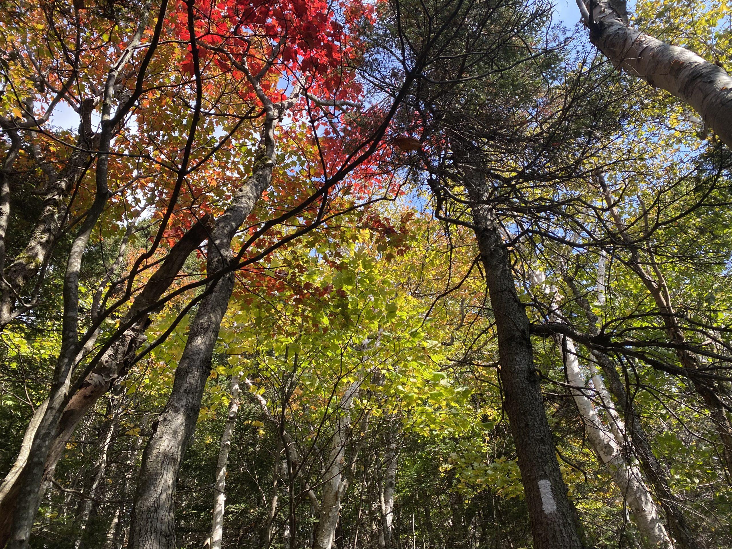 fall foliage hiking photos
