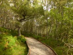 A pretty little forest walk.