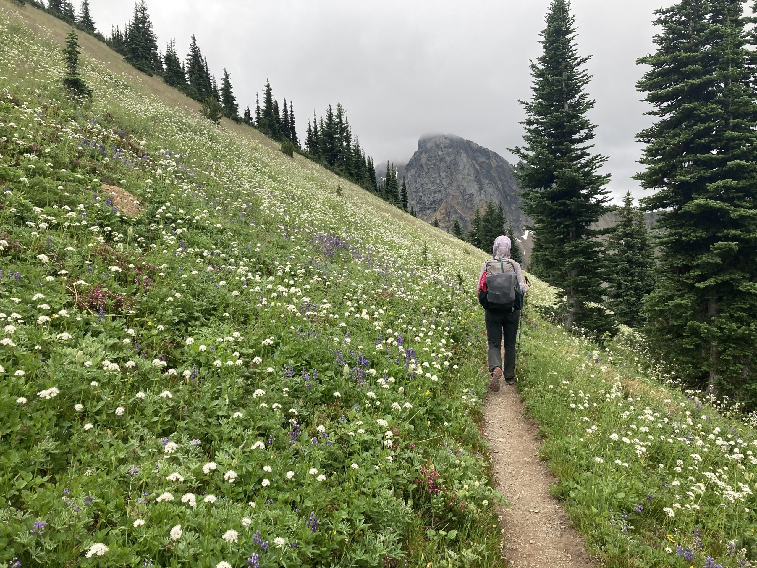 Hiking on Pacific Crest Trail with flowers in 2020