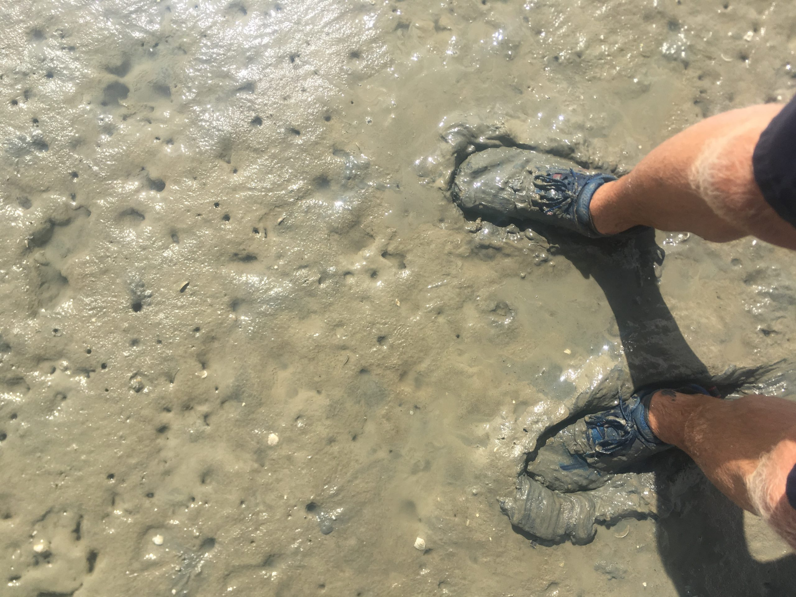 Used Hiking Shoes in Coastal Mud