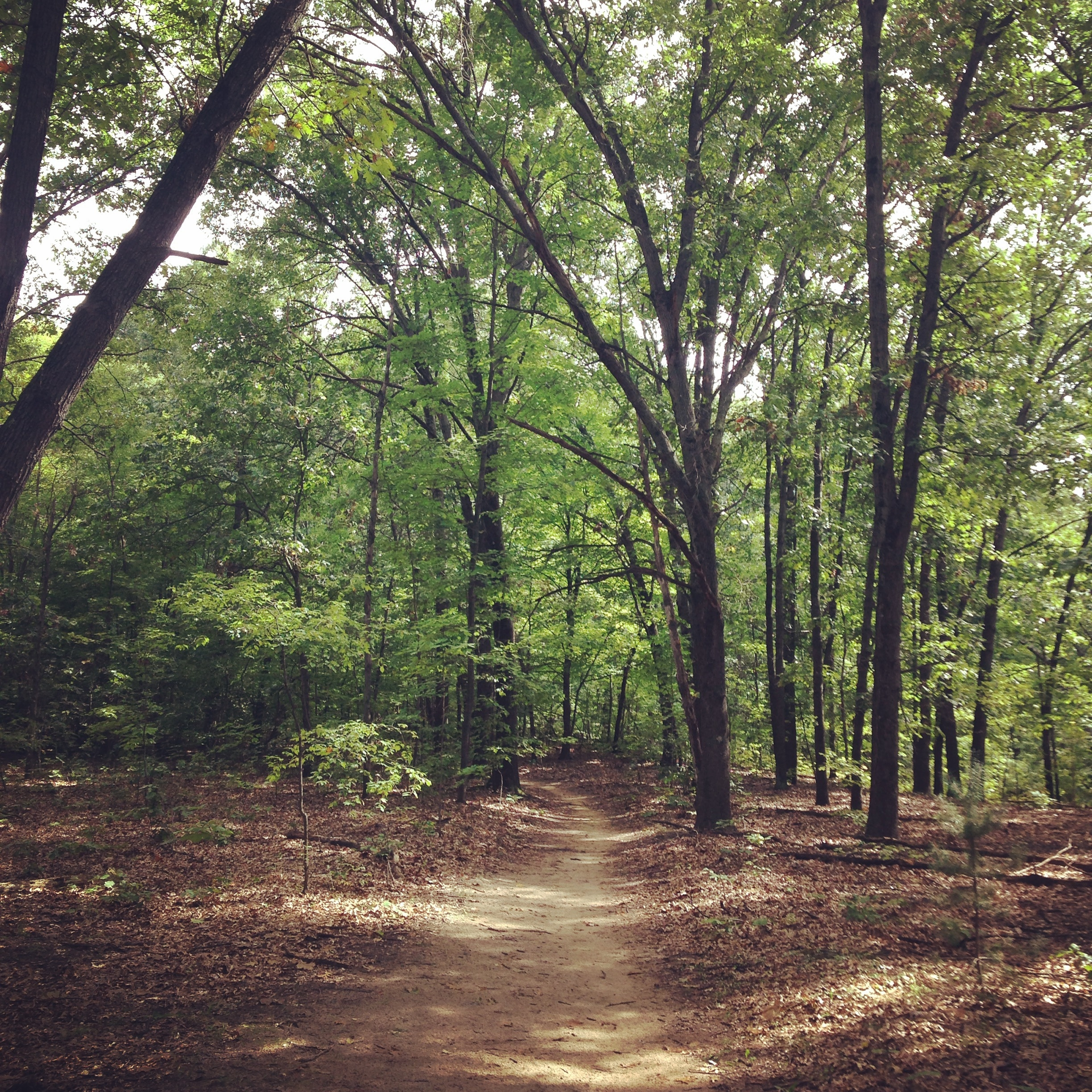 A calm looking and lighted forested trail.