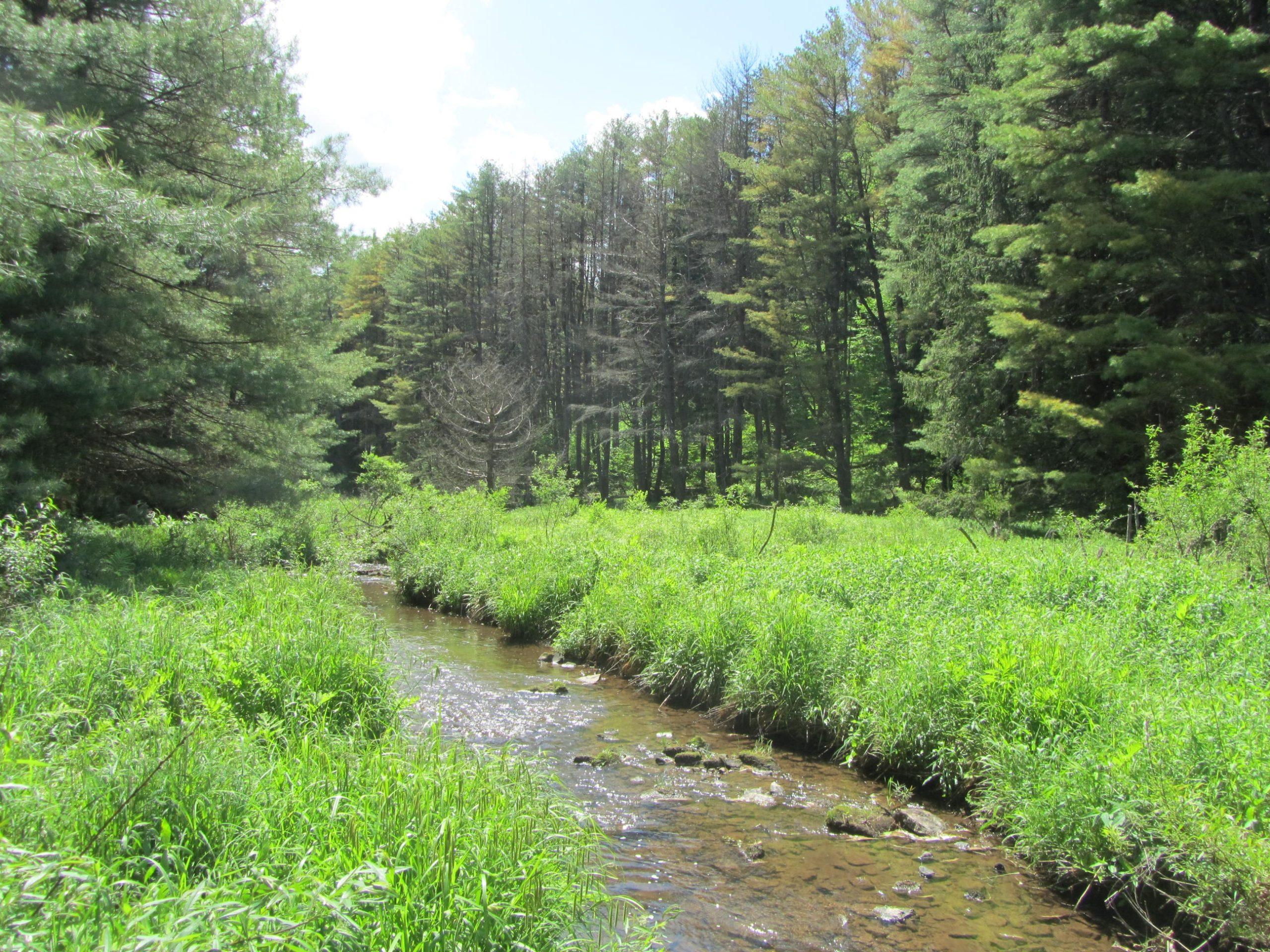susquehannock trail system