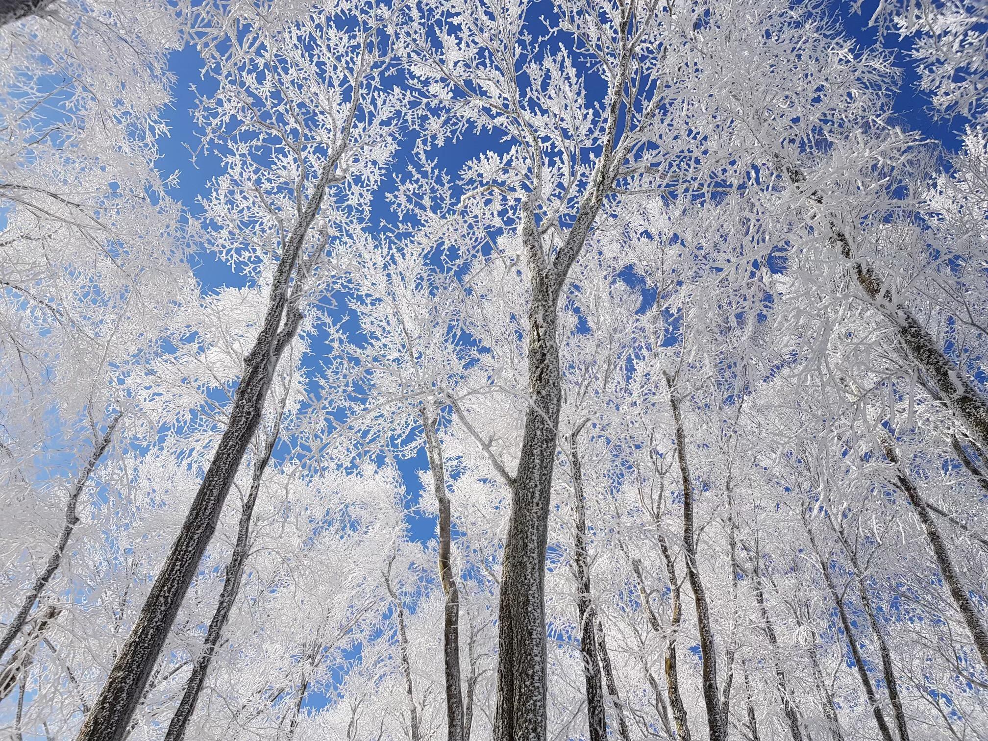 start appalachian trail february